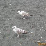 Чайки на пляже