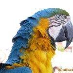 Фото с попугайчиком на память