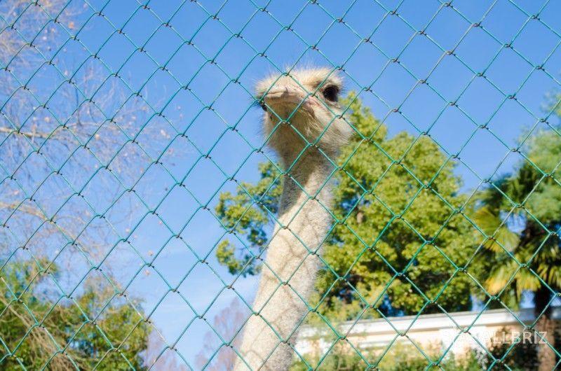 Вольер со страусами