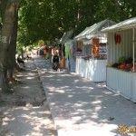 Аллея на Курортной улице в Архипо-Осиповке