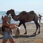 Фото с верблюдом на память