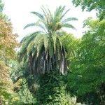 Ботанический сад в Сухуме