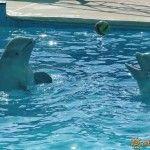 Дельфинарий в Небуге