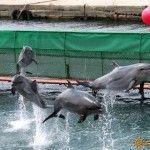 Дельфинарий в Большом Утрише