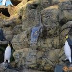 Пингвинарий в Парке Культуры и Отдыха