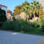 Пальмы у Центра Национальный Культур в Лазаревском