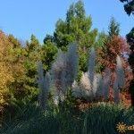 Растительность в Парке Культуры и Отдыха в Лазаревском