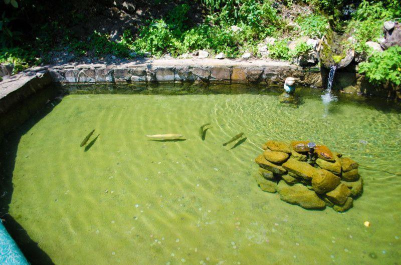 Бассейн с живой форелью