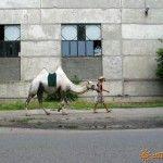 Фото с верблюдом