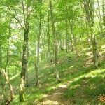 Головинский лес