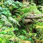 Крокодил в Головинском лесу