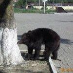Медведь в парке «Юность»