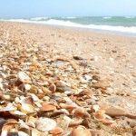 На пляже песок с ракушками