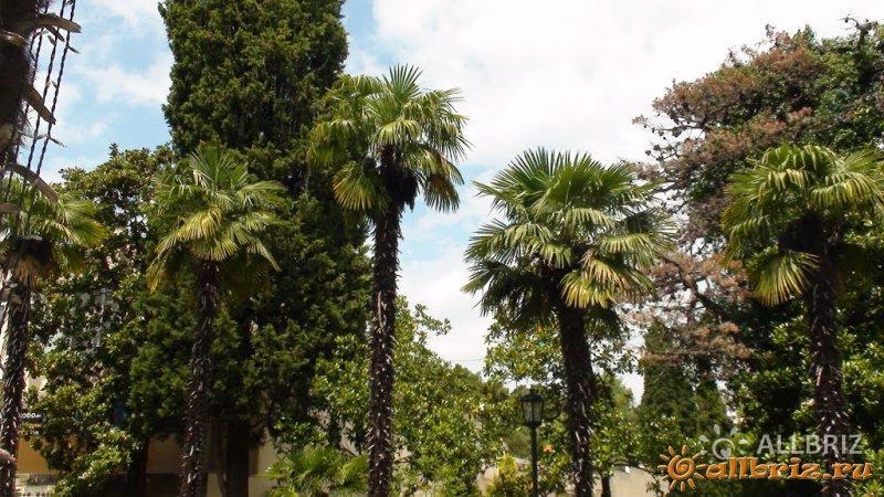 Пальмы в парке
