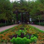 Парк санатория «Дивноморское»