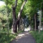 Парк в Джубге