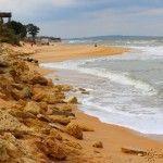 Ракушечники на пляже