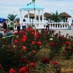 Розы на набережной