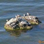 Самый маленький в мире остров находится в Коктебеле