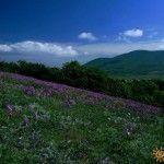 Весенние цветы на холме