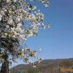 Весна в горах Агоя