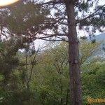 Вид на Агой из леса