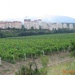 Виноградник около Алушты