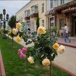 Улица Земская в Феодосии