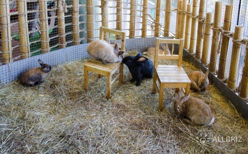 Кроликов можно гладить, кормить, фотографироваться с ними