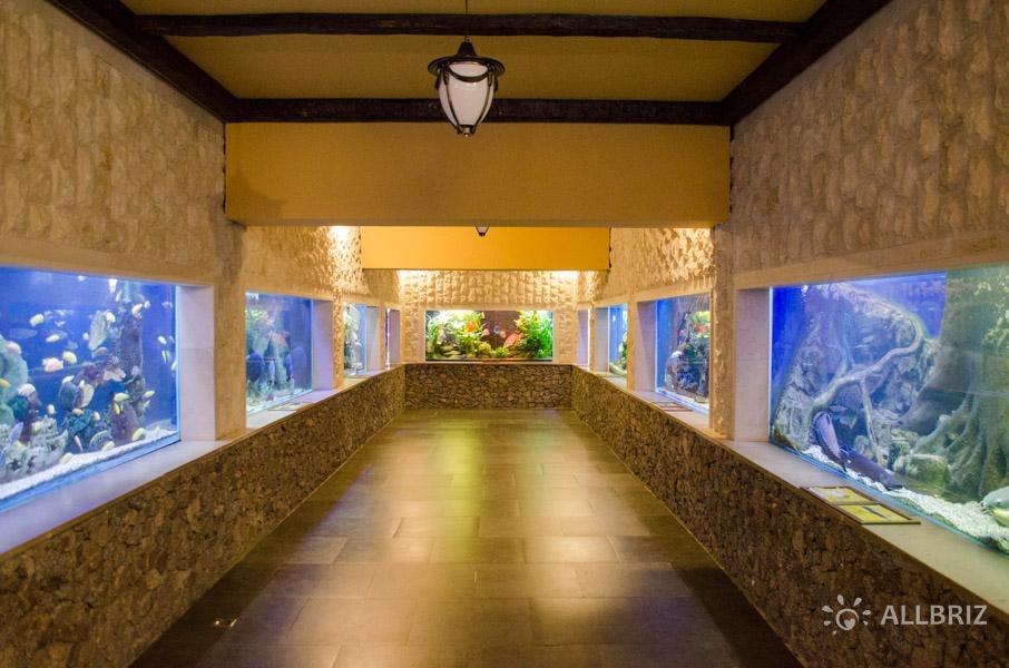 Зал океанариума «Дельфин»