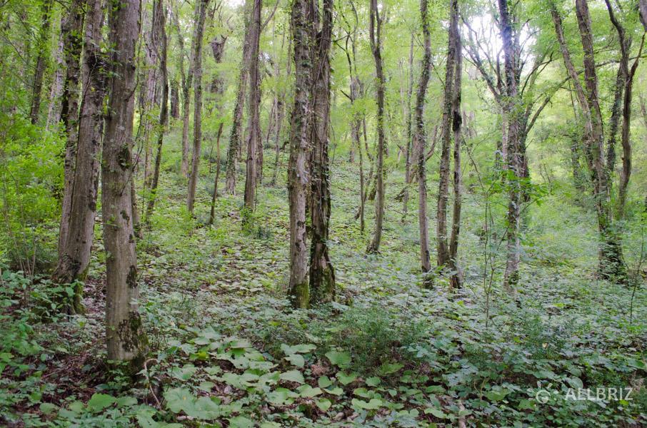 Сказочный лес по дороге к Крабовому ущелью