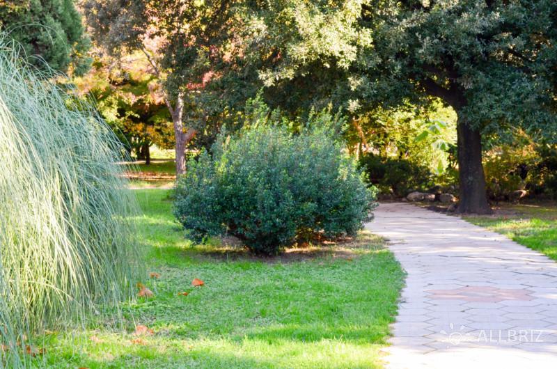 Аллея в Лазаревском парке