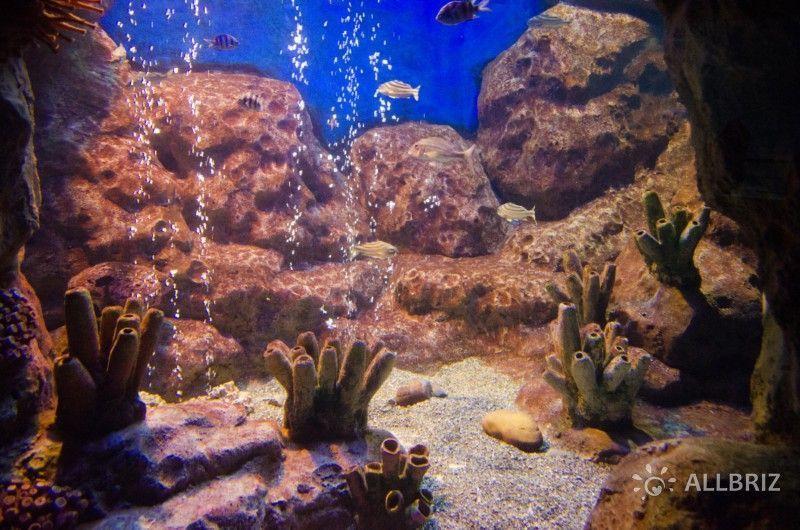 Аквариум с морскими рыбами