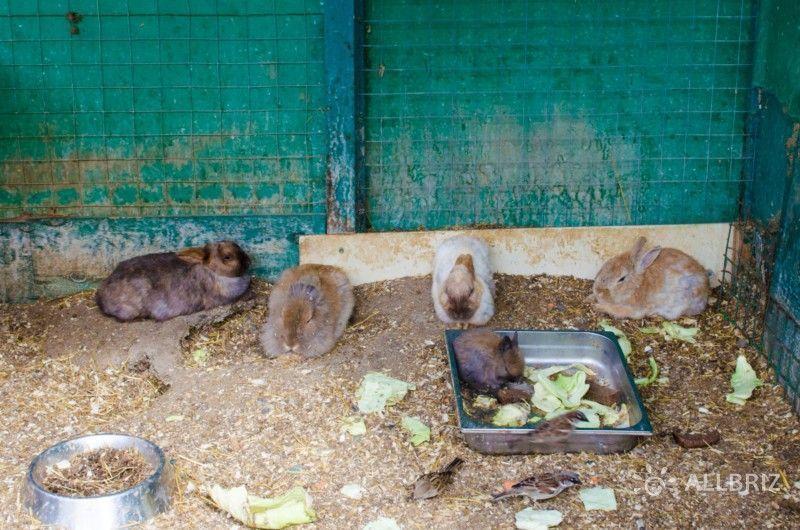 Вольер с кроликами
