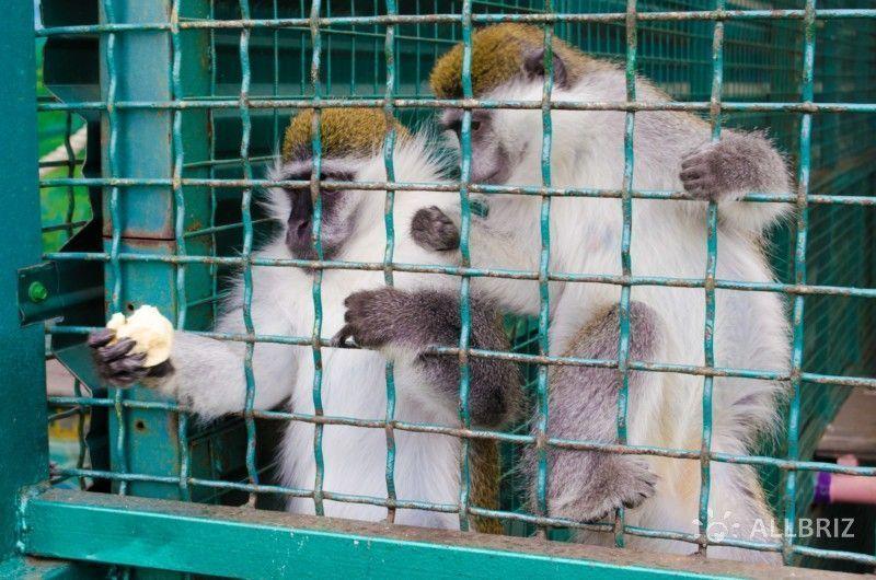 Вольер с обезьянами