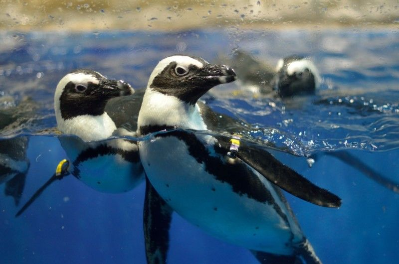 Пингвинарий «Немо» в Джемете