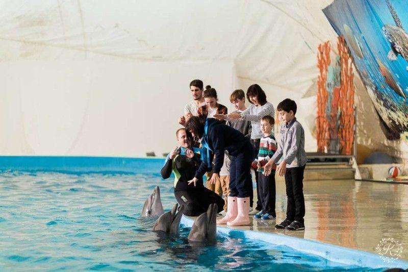 Знакомство с дельфинами
