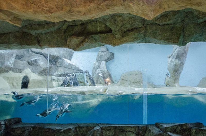 Вольер с очковыми пингвинами и перуанскими пингвинами