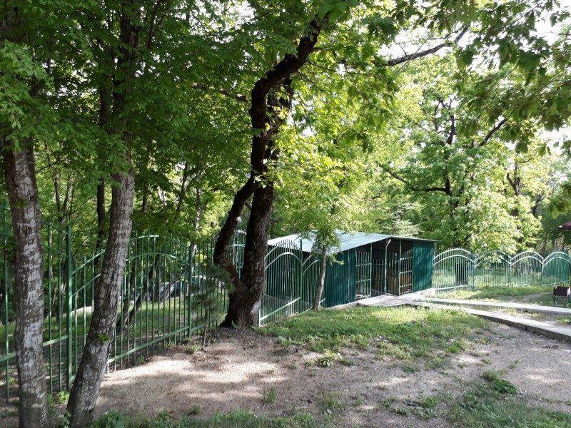 вольерыт и территории для собак