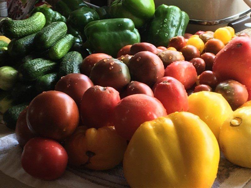 Весь сезон у нас есть свежие овощи и зелень.